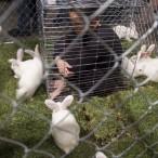 caged3 thumbnail